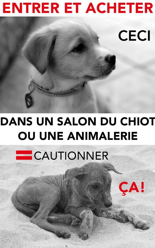 Salons du chiot et animaleries attention aux arnaques protection et action pour les chiens - Salon du chiot ville la grand ...